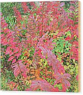 Colorful Fall Leaves Autumn Crepe Myrtle Wood Print