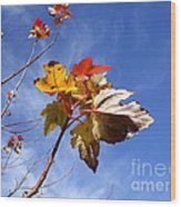 Colorful Fall Leave's With Blue Sky Wood Print