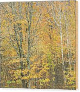 Colorful Fall Trees In Maine Wood Print