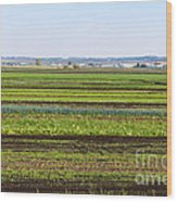 Colorful Fields Wood Print