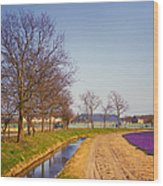 Colorful Fields Of Holland Wood Print