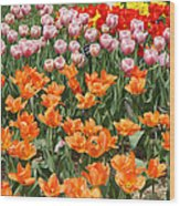 Colorful Flower Bed Wood Print