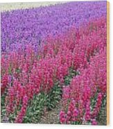 Colorful Flower Fields Wood Print