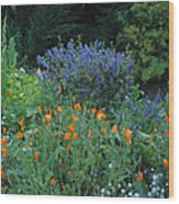 Colorful Flowers Along The Trail Wood Print