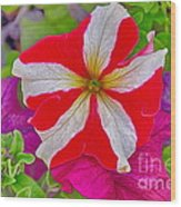 Colorful Garden Flower Wood Print
