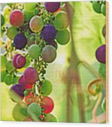 Colorful Grapes Wood Print
