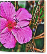 Colorful Hibiscus Wood Print