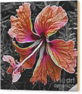 Colorful Hibiscus On Black And White 2 Wood Print by Kaye Menner