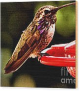 Colorful Juvenile Humingbird Wood Print