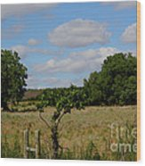 Colorful Kansas Country Pasture Wood Print