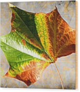 Colorful Leaf On The Ground Wood Print