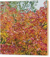 Colorful Leaves In Autumn Wood Print
