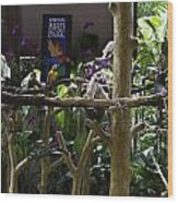 Colorful Macaw And Other Birds At The Jurong Bird Park In Singapore Wood Print