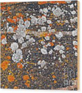 Colorful Moss Spots On A Gneiss Rock Wood Print