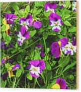 Colorful Pansies Wood Print