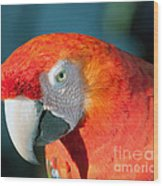 Colorful Parrot Wood Print