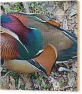 Colorful Plume Wood Print