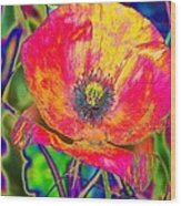 Colorful Poppy Wood Print