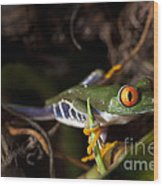 Colorful Red Eyed Tree Frog Wood Print