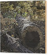 Colorful Resting Place Wood Print