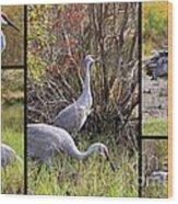 Colorful Sandhill Crane Collage Wood Print