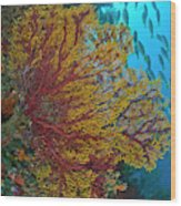 Colorful Sea Fan Or Gorgonian Coral Wood Print