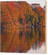 Colorful Shores Wood Print