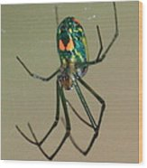 Colorful Spider In The Swamp Wood Print