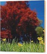 Colorful Spring Wood Print