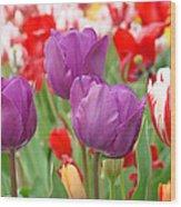 Colorful Spring Tulips Garden Art Prints Wood Print