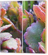 Colorful Succulents In Stereo Wood Print