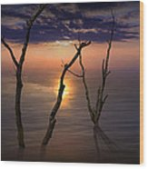 Colorful Sunset Seascape With Tree Trunks Wood Print