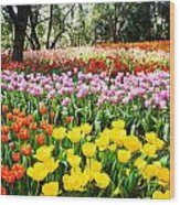 Colorful Tulip Field Wood Print
