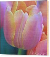 Colorful Tulip Wood Print by Kathleen Struckle