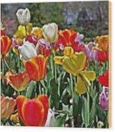 Colorful Tulips Wood Print