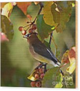 Waxwing In Fall Colors Wood Print