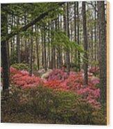 Colorful Woodland Azalea Garden Wood Print