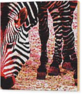 Colorful Zebra - Buy Black And White Stripes Art Wood Print