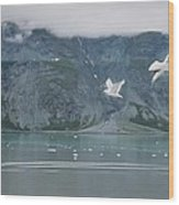 Colors Of Alaska - Glacier Bay Wood Print