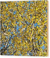 Colors Of Autumn - Yellow - Featured 3 Wood Print