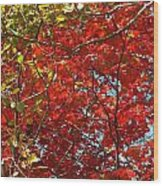 Colors Of Fall 3 Wood Print