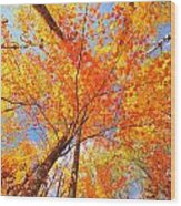 Colors Of Leaves Yellows Oranges 2884 Wood Print
