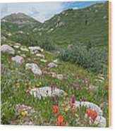 Colors Of The Rainbow - Colorado Mountain Summer Wood Print