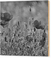 Colour Blind Poppies 2 Wood Print