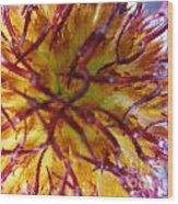 Colour Convolution Wood Print