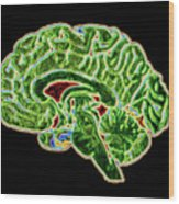 Coloured Ct Scan Of A Healthy Brain (side View) Wood Print
