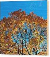 Colourful Autumn Tree Against Blue Sky Wood Print