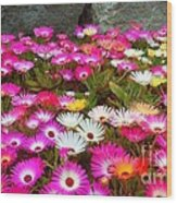 Colourful Flowers Wood Print