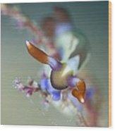 Colourful Nudibranch Feeding Wood Print