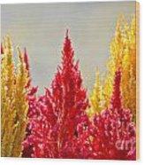 Colourful Plants Wood Print